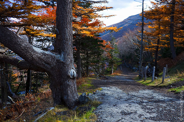Дорога на Фудзи