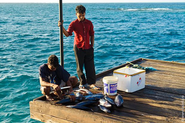 Мальдивы (2 часть)